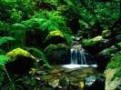 سریلانکا - جنگلهای رزرو سینهاراجا