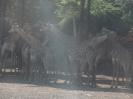 باغ وحش سافاری - _10