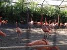 باغ وحش سافاری - _8