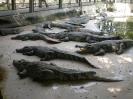 بانکوک - مزرعه تمساح ها