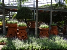 تایلند - پاتایا - باغ گیاهشناسی نانگ نوچ_22