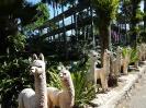 تایلند - پاتایا - باغ گیاهشناسی نانگ نوچ_5