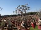 تایلند - پاتایا - باغ گیاهشناسی نانگ نوچ_8