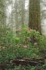 کالیفرنیا - پارک های ملی ردوود