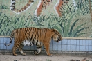 دائجو - پارک و باغ وحش دالسئونگ